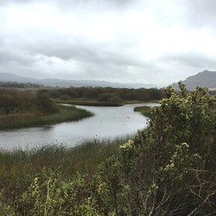 Carmel River Lagoon/rainy day