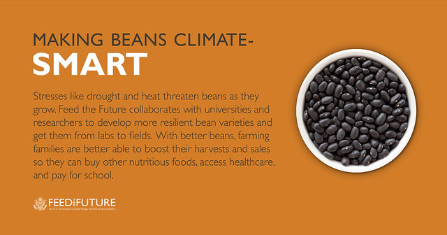 Making Beans Climate-Smart