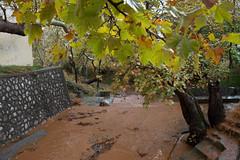 Η πρώτη δυνατή βροχόπτωση το φετινό φθινόπωρο στην Ψίνθο
