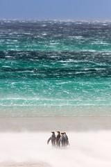 La cuestión de las Islas Malvinas ayer y hoy: colonialismo, soberanía y diálogo