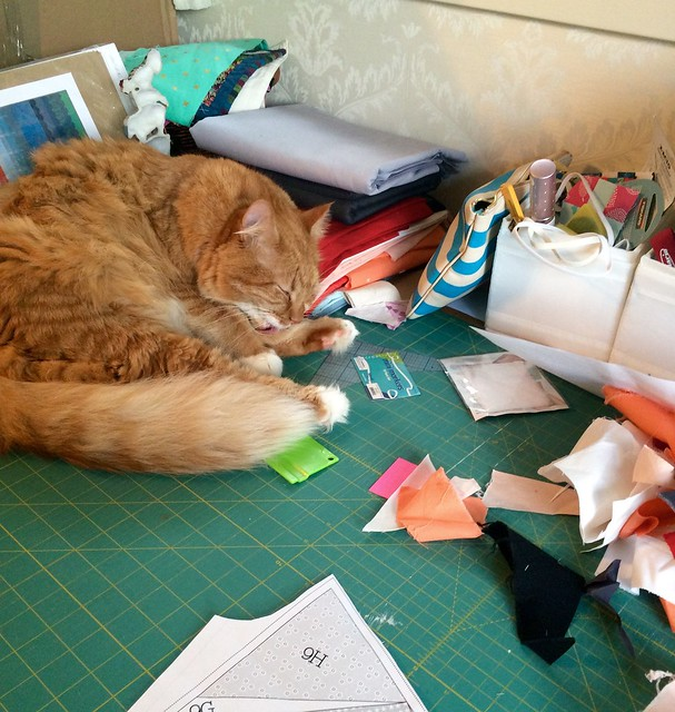Butch, my quilting cat