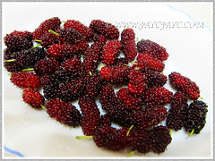 Mulberry fruits of Morus nigra (Black Mulberry, Blackberry, Black-fruited Mulberry, Indian/Persian Mulberry, Silkworm Mulberry), Aug 25 2015
