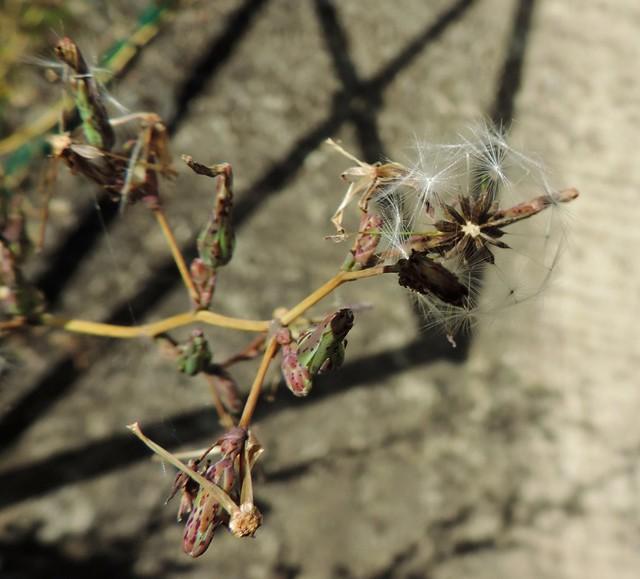 circle of seeds