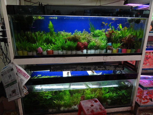 aquarium stores in Danang, Vietnam 20824536762_7a749be1b4_z