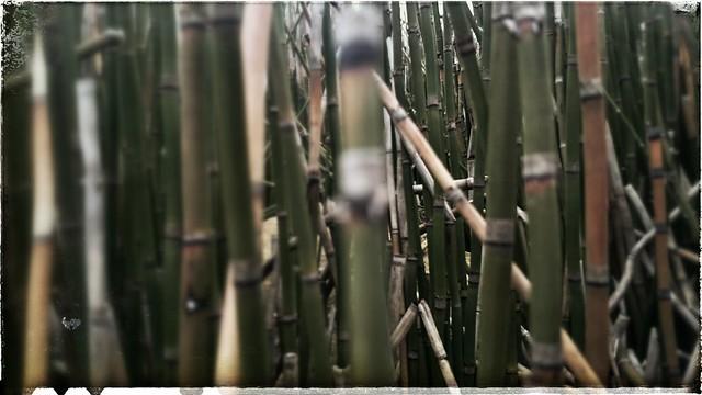 Reed Jungle