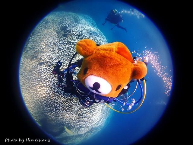 今日は水中にクマがいっぱいクマ♪ なぜならクマさんのダイビングショップだからw