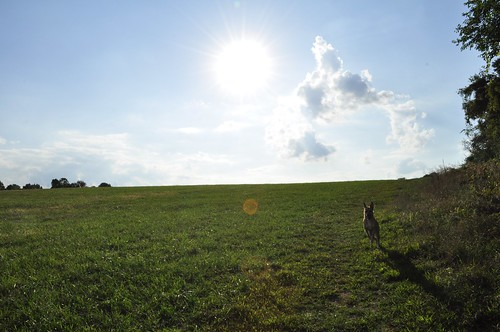 Walk around old farm fields in Long Vally, NJ