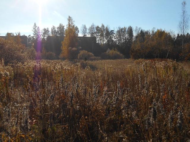 Niittynäkymiä syksyllä; kuihtunutta niittyä 15.10.2015 Espoo Leppäsilta