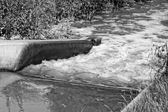 Wateringbury
