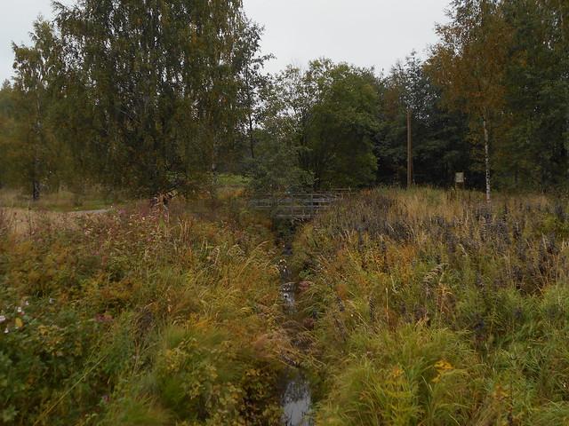 Niittynäkymiä syksyllä; monilajinen ojanvarsiniitty 17.9.2015 Espoo Leppävaara
