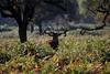 Autumn antlers II by GillK2012