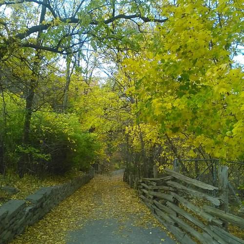 The path #toronto #riverdaleparkwest #riverdalepark #autumn