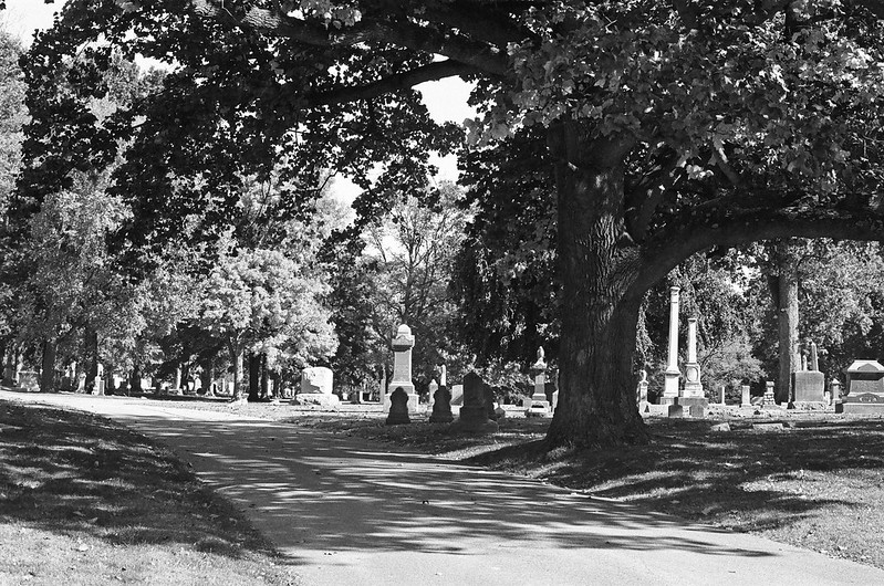 Shaded cemetery path