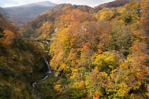 autumn leaves japan waterfall 日本 niigata 紅葉 秋 滝 myoko 新潟 myokokogen 妙高 妙高高原 fudou 不動滝 関温泉 燕温泉