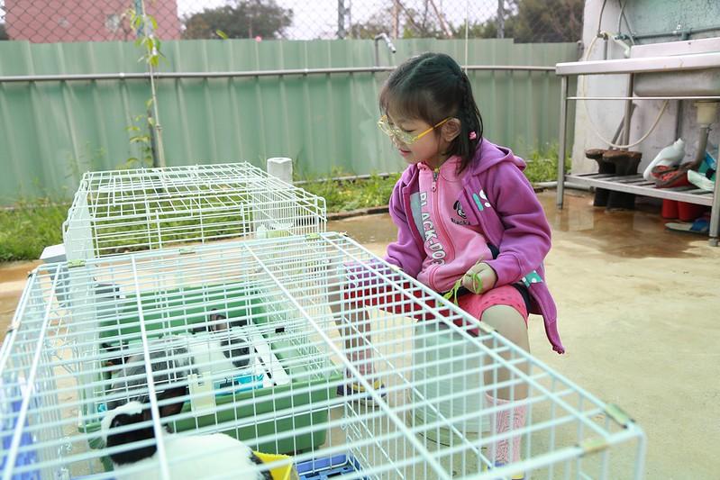 寶妹在餵兔子