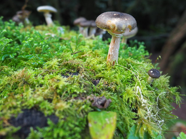 Un champignon pris avec mon hybride Olympus E-M10, à 14mm dans le parc national naturel de São Miguel