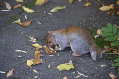 Bunny Squirrel