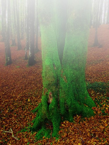 Moss and mist!