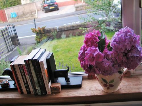 Hydrangeas from my front garden :)