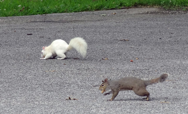 olney-squirrels