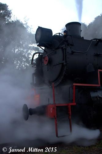 Steaming Morning