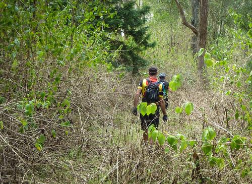 Mt Goonneringerringgi - Deer Reserve State Forest