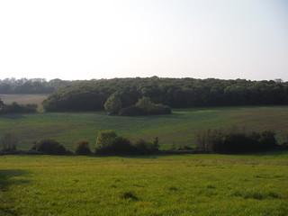 Hawe's Wood