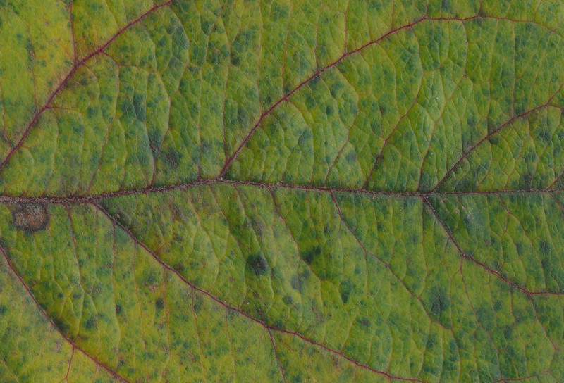 CreativeCommons - Autumn leaves - 2015 Series 1 - 03 by #TexturePalace