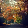 Must stop and take #fall photos of #beautifultrees #NorthCanton