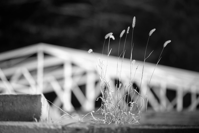 weeds in monochrome