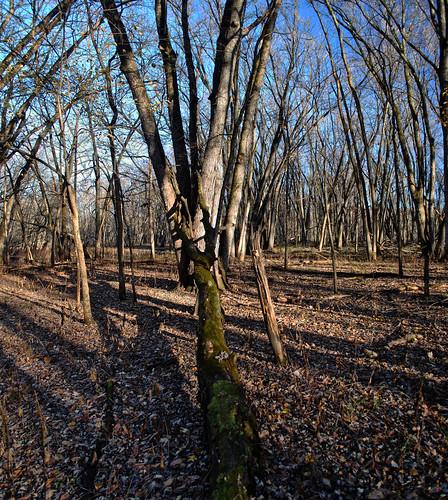 Mukwa Bottomland Forest State Natural Area
