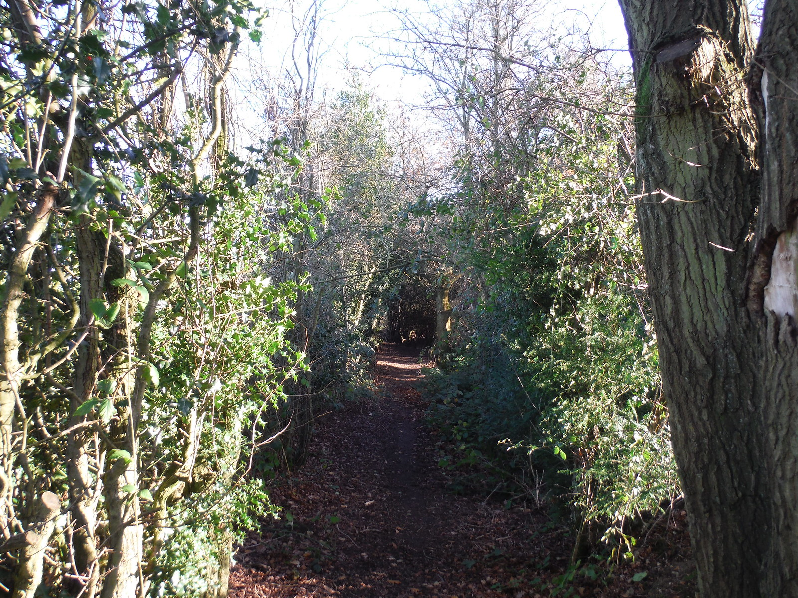 Enclosed Path, Swan Bottom SWC Walk 140a Wendover to Great Missenden