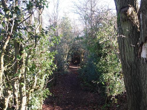 Enclosed Path, Swan Bottom