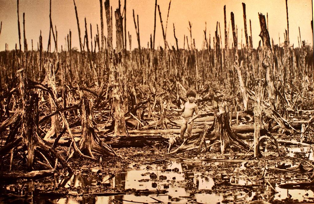 Destruction liée à l'utilisation de l'agent Orange, défoliant chimique produit par Monsanto - Photo du musée de la guerre du Vietnam