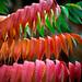 Rainbow Ally. by Omygodtom
