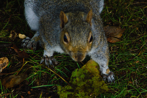 Demanding squirrel, West Park