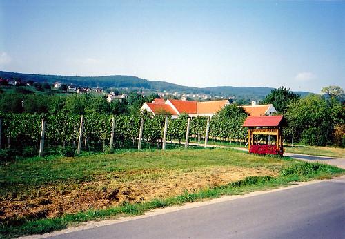 Szőlőültetvények Rohonc határában