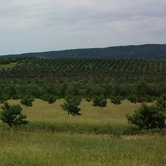 Endless #apple #orchards #wv #easternpanhanfle