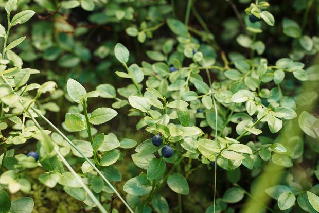 Blueberries | Sarka Babicka Photography