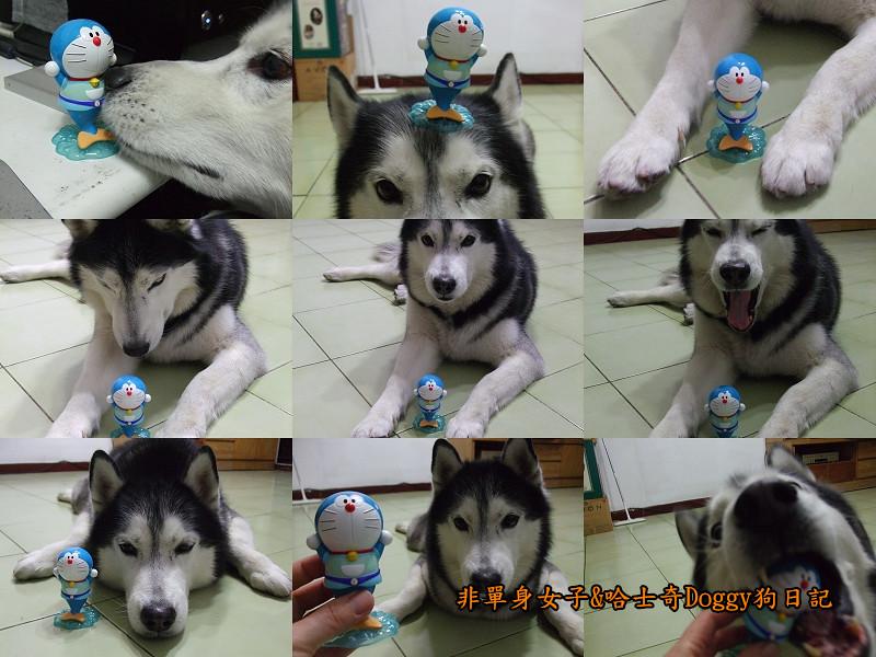 2012哈士奇doggy寵物玩具06