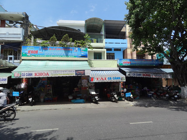 aquarium stores in Danang, Vietnam 20807763476_696c6f26db_z