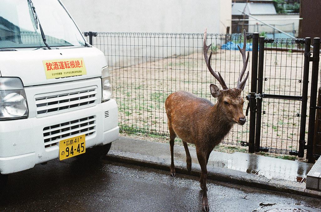 鹿 嚴島(Itsuku-shima)広島 Hiroshima 2015/08/31 從車旁邊冒出一隻鹿。  Nikon FM2 / 50mm Kodak UltraMax ISO400 Photo by Toomore