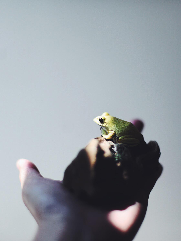 insta frog