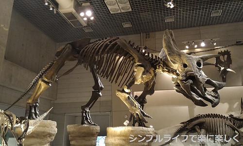 東京3日目、博物館・トリケラトプス