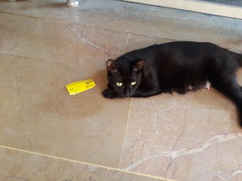Akciós fekete macska eladó!