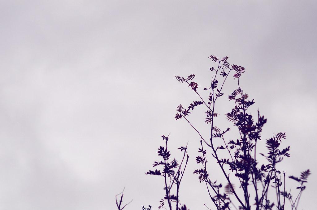 autumnwalk8