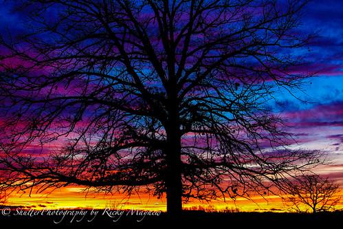 sunset sky tree nature clouds landscape canon50d yourbestoftoday