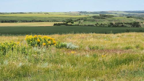 canada grass olympus prairie saskatchewan omd eaglecreek em5