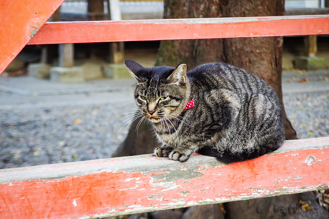 Today's Cat@2015-10-27