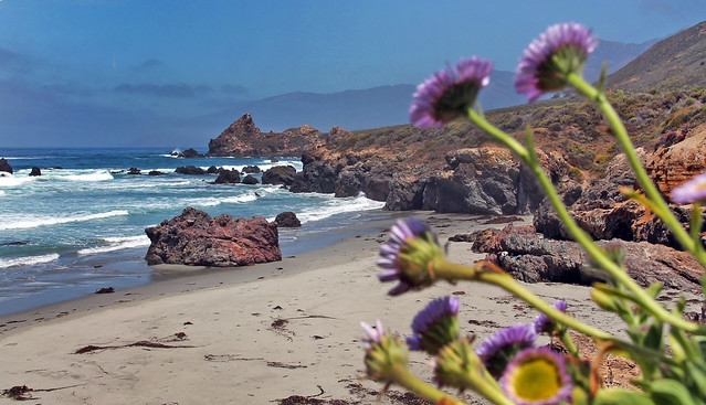 Los Padres Beach